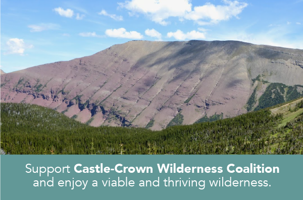 Protect a wild Castle